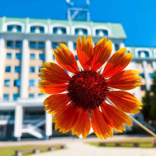 Опитування здобувачів вищої освіти щодо якості освітнього процесу в УДФСУ