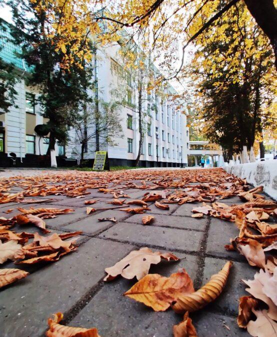 В Університеті пройшли курси підвищення кваліфікації державних службовців на замовлення Рахункової палати України